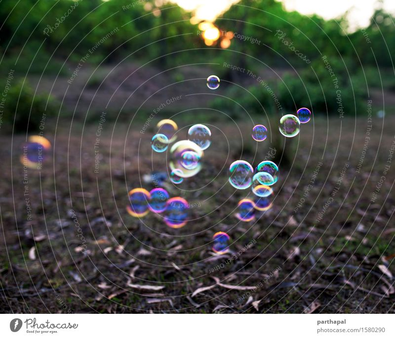 Soap bubbles floating in the air Environment Nature Landscape Air Sun Sunrise Sunset Beautiful weather Blue Multicoloured Yellow Gold Green Contentment Serene