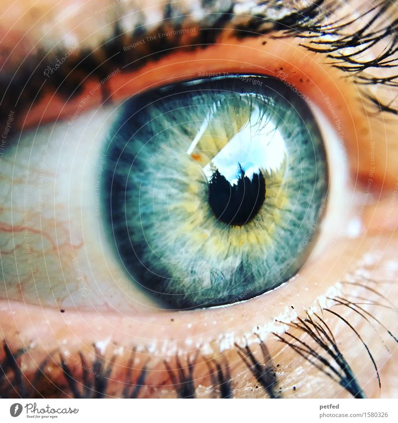 Light of the body Eyes Eyelash Mascara Iris Pupil Vessel Looking Blue Yellow Gray Green Black White Reflection Life Uniqueness Colour photo