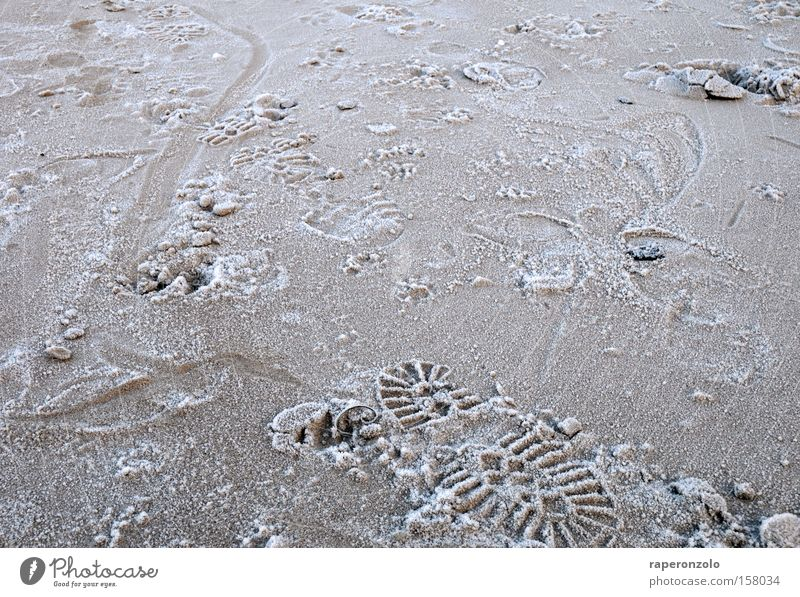 Winter Cold Sand Lanes & trails Ice Earth Search Transience Tracks Footprint Tire tread Stride Impression Animal tracks Enter