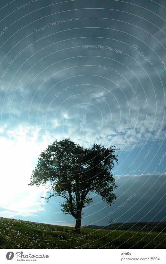Sky Tree Sun Clouds Earth Treetop