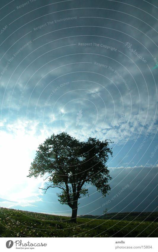 treen in heaven Tree Clouds Light Treetop Sky Sun Earth