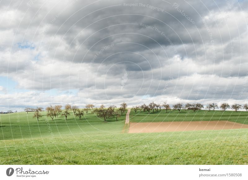 orchards Environment Nature Landscape Plant Sky Clouds Storm clouds Sunlight Summer Weather Tree Grass Agricultural crop Fruit trees Fruittree meadow Meadow