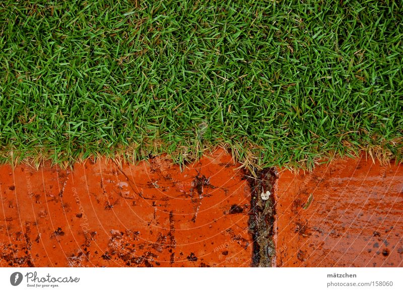 the lawn Lawn Grass Brick Cuba Red Green Contrast Rain Wet Meadow Boundary Composing Golden section