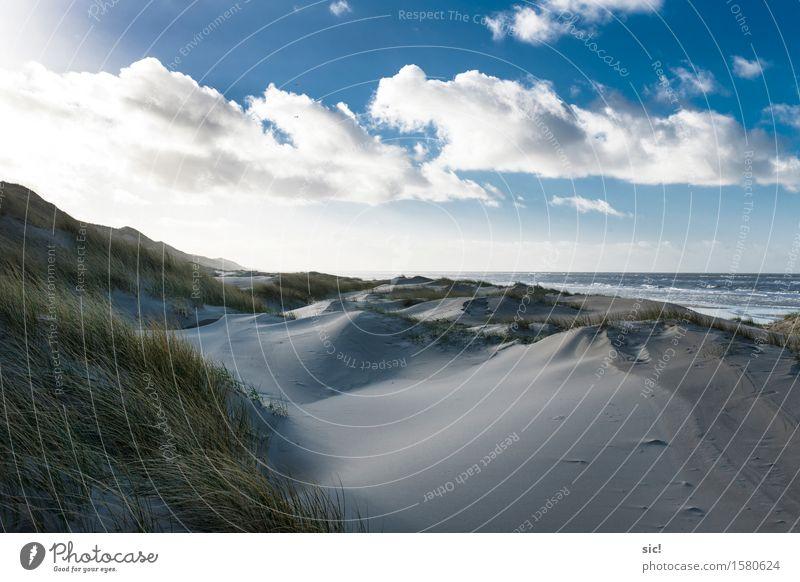 Aan Zee Vacation & Travel Tourism Beach Ocean Landscape Sand Water Clouds Sunlight Grass Coast North Sea Bergen aan Zee Netherlands Cold Maritime Town Blue