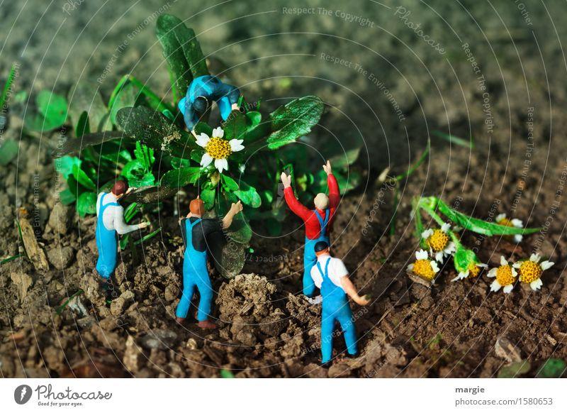 Miniwelten - Flower harvest Gardening Workplace Services Team Human being Masculine Man Adults 5 Plant Tree Leaf Blossom Blue Green Landscape format Harvest