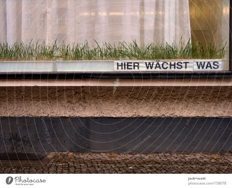 Project. Watching the grass grow Science & Research Grass Prenzlauer Berg built Facade Window box Stone Glass Signage Warning sign Wordplay Growth already Town