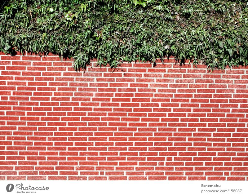 Plant White Red Wall (barrier) Bright Bushes Brick Symmetry
