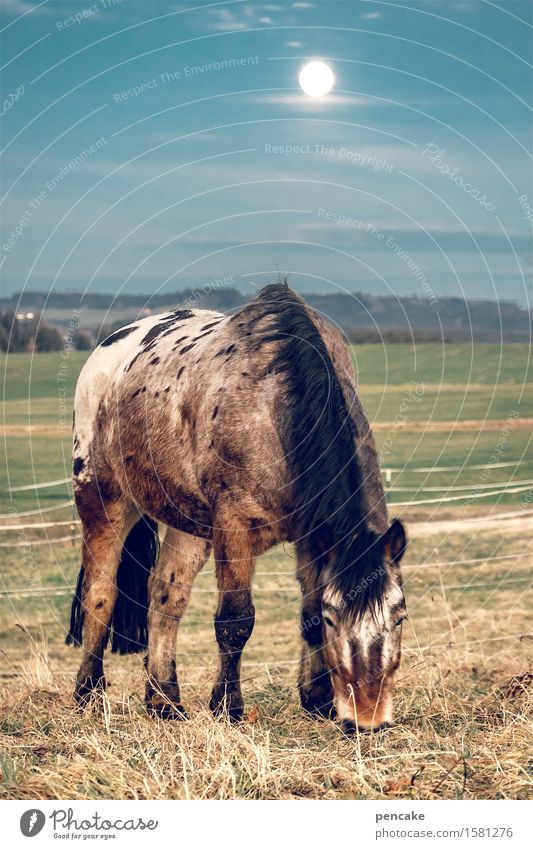 horse in the corridor Nature Landscape Elements Earth Sky Night sky Moon Full  moon Meadow Field Horse 1 Animal Observe Touch To feed Moody Safety (feeling of)