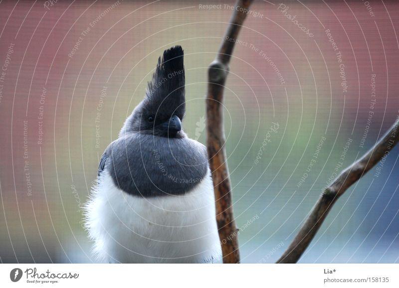 Animal Bird Feather Twig Watchfulness Pride Plumed Stuffed animal Bright background