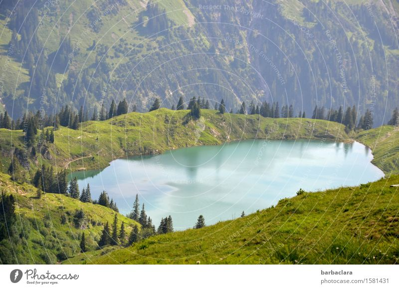clear, cold mountain lake Vacation & Travel Hiking Landscape Elements Earth Water Meadow Forest Alps Mountain Allgäu Alps Lake Fresh Relaxation Freedom