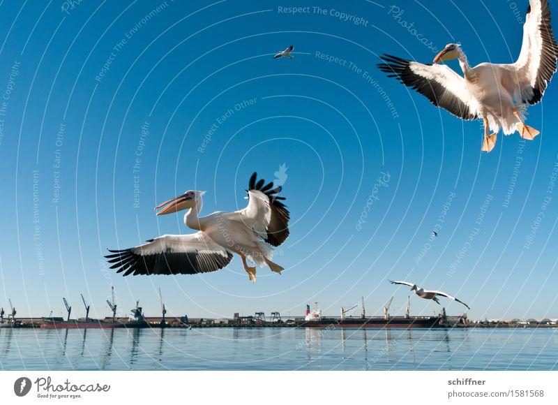 """Kumma, Gunhilde, there's finger food over there!"" Coast Ocean Animal Bird 2 Group of animals Herd Pair of animals Flying Harbour Crane Pelican"
