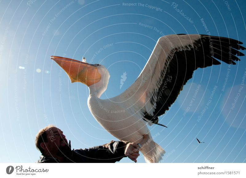 All you can feed Human being Masculine Man Adults Head Arm 1 Animal Wild animal Bird Feeding Blue Avaricious Appetite To feed Pelican Wing Gullet Coil