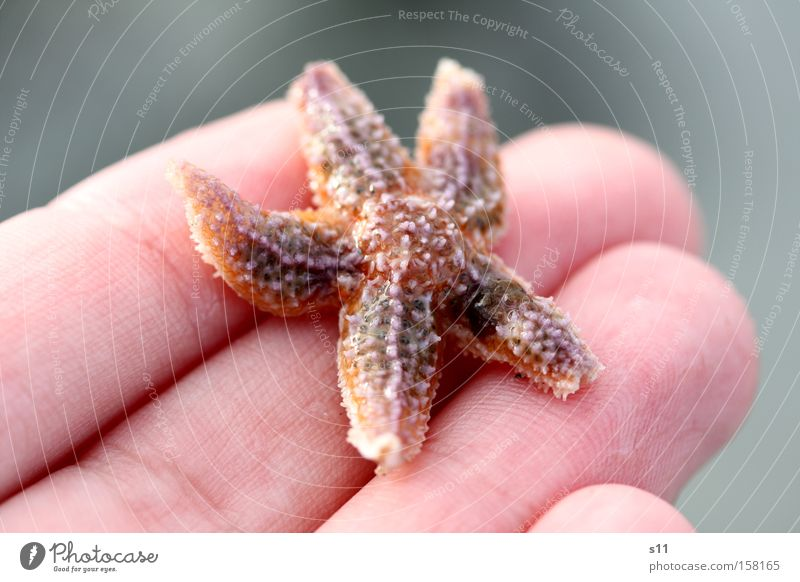starfish Starfish Ocean Beach Hand Sand Water Living thing Collection Fingers 5 Wet Underwater photo Skin Summer Beautiful sea dweller Arm Coast