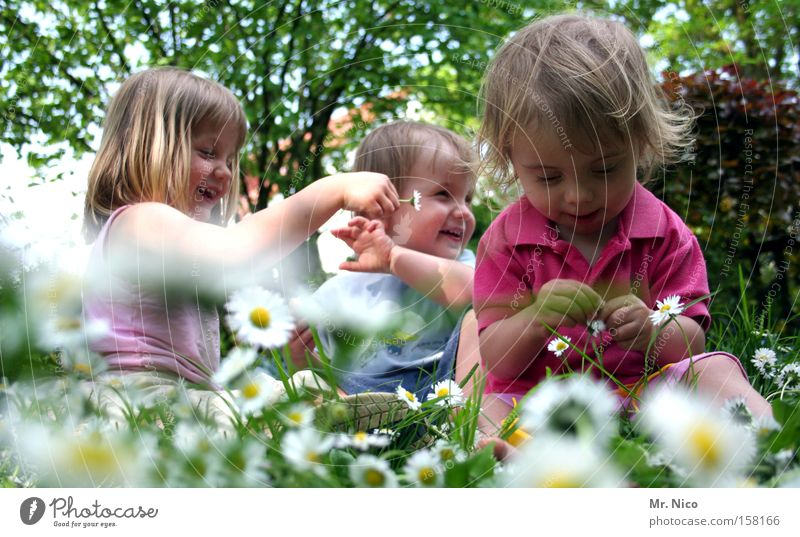 spring fever Joy Summer Garden Toddler Girl Boy (child) Brothers and sisters Friendship Spring Meadow Laughter Funny Green Daisy 3 Titillation Colour photo