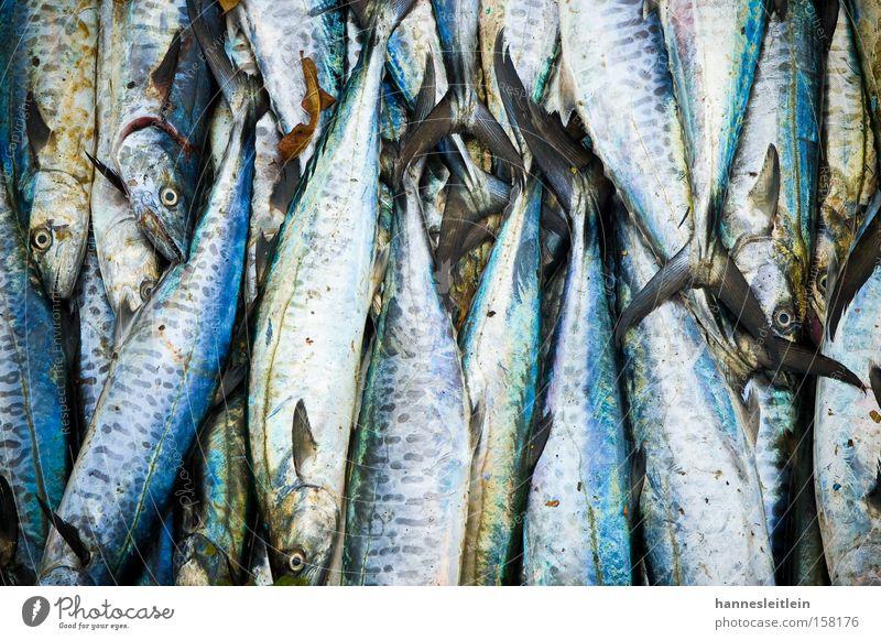 fish kerala Fish India Eyes Blue Water Nutrition Food Stack Scales