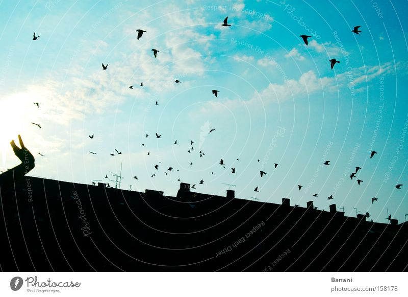 freedom Sky House (Residential Structure) Bird Happy Swallow Flying Vacation & Travel Blue Clouds Hand Roof Joy Exterior shot Sun Far-off places