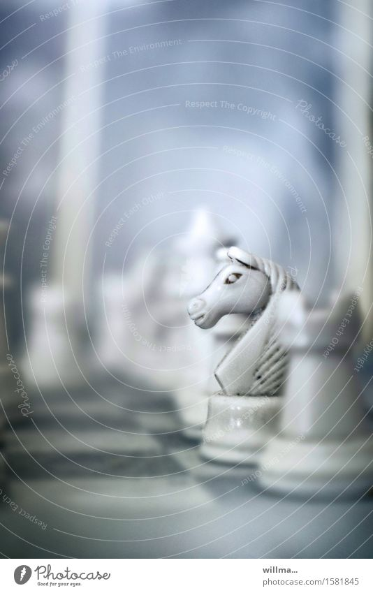 'to the white horse' Leisure and hobbies Playing Board game Chess White Concentrate Planning jumper Horse Chess piece hop Ivory Chessboard jumpinsfeld Dusty