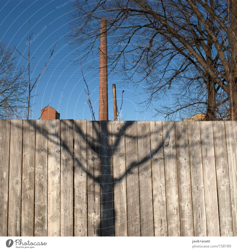 half shadow and half chimney Cloudless sky Winter tree Branch Lichtenberg Industrial plant Ruin Architecture Chimney Wooden fence wood Line Exceptional Together