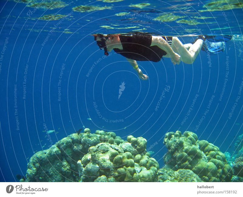 Water Ocean Underwater photo Dive Maldives Reef Snorkeling
