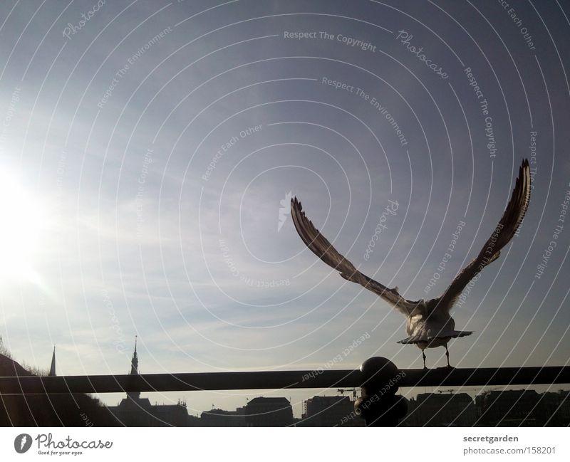 no alster sneak Seagull Alster Rod Silhouette Sun Horizon Judder Cold Winter Under Blue Black Back-light Bird Beautiful weather Perfect Wing Snapshot