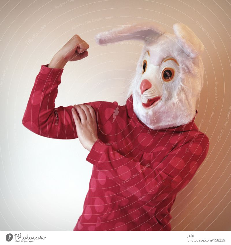 power rabbit Hare & Rabbit & Bunny Easter Bunny Carnival Dress up Animal White Funny Strong Woman Mask Costume Force Joy Human being