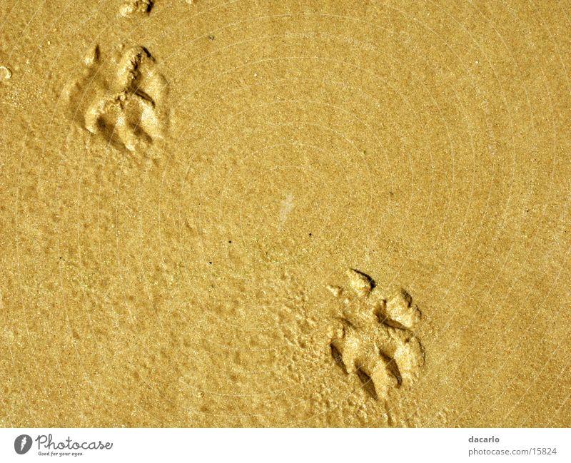 Beach Sand Tracks