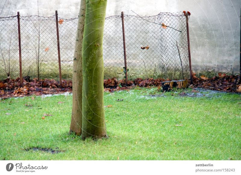 inkbox garden Meadow Lawn Grass surface Tree Tree trunk Pear tree Wall (building) Wall (barrier) Fence Wire netting fence Spring Garden plot Park