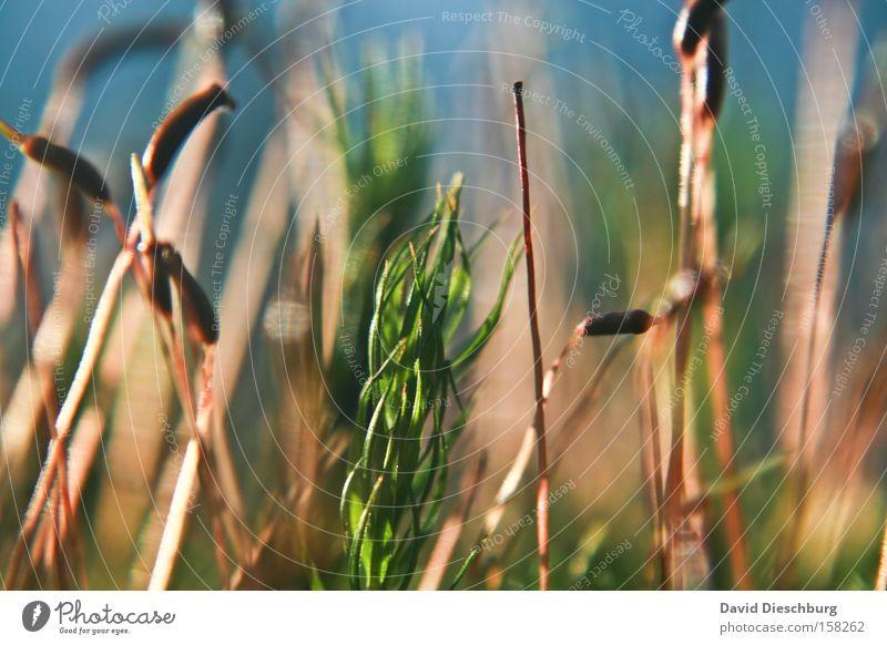 Nature Plant Grass Spring Stalk Bud Leaf bud