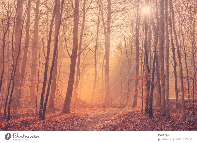 Forest landscape with mist and sunrise Nature Green Beautiful Summer Tree Sun Landscape Leaf Forest Environment Street Autumn Bright Park Fog Footpath