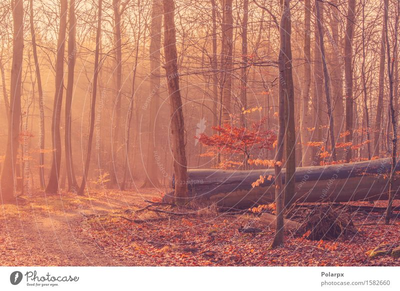 Fallen tree in a misty sunrise Beautiful Summer Sun Environment Nature Landscape Autumn Fog Tree Leaf Park Forest Street Bright Green Clearing magical