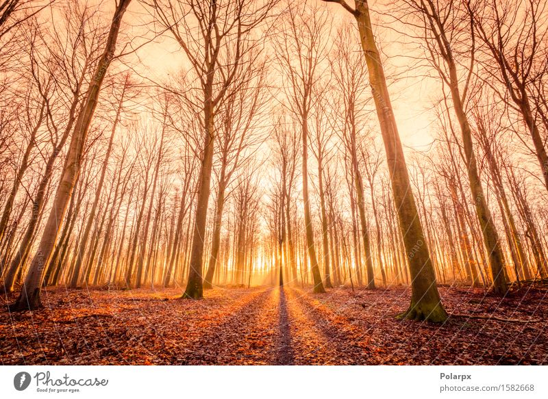 Sun is rising in a forest Nature Green Beautiful Summer Tree Sun Landscape Leaf Forest Environment Street Autumn Bright Park Fog Footpath
