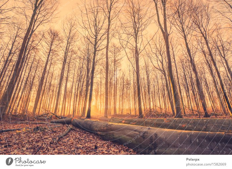 Lumber in a forest Beautiful Summer Sun Environment Nature Landscape Autumn Fog Tree Leaf Park Forest Wood Bright Clearing Log magical Fairy tale light fall