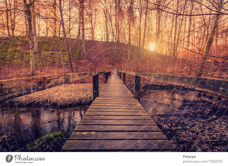 Forest bridge with wooden planks Sky Nature Plant Beautiful Summer Colour Tree Landscape Forest Environment Yellow Street Architecture Autumn Wood Lake