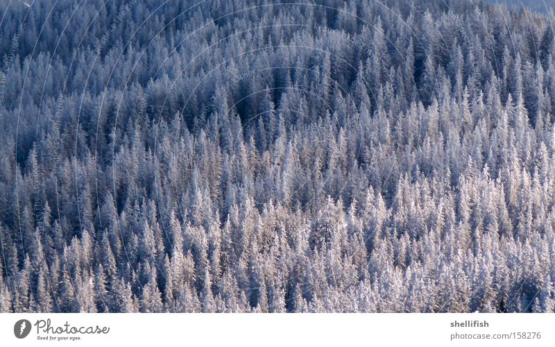 Nature White Tree Blue Winter Forest Cold Snow Above Mountain Freedom Ice Climate Clarity Ecological Height