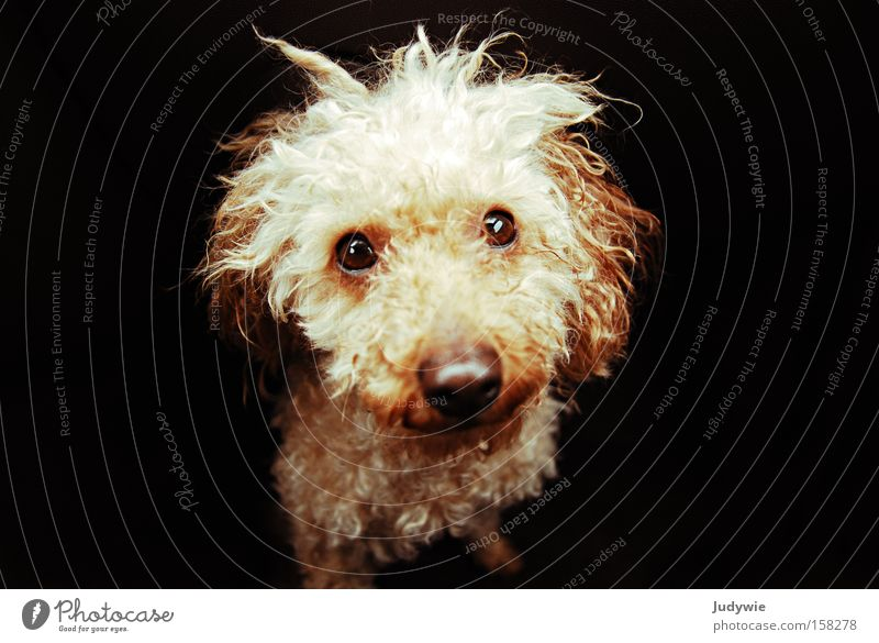 Eyes Animal Dog Sadness Fear Small Nose Grief Sweet Distress Mammal Panic Curl Cry Hair and hairstyles Compassion