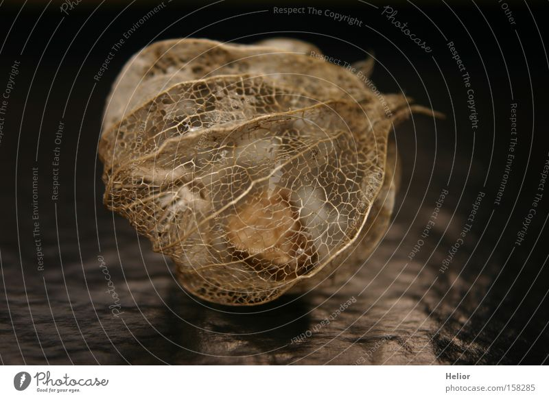 Black Dark Fruit Hope Grief Net Clarity Transience Distress Transparent Fine Fragile Skeleton Sheath Wonder Scaffolding
