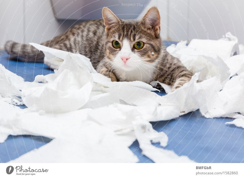Lets have fun... Flat (apartment) Room Bathroom Toilet Animal Pet Cat 1 Toilet paper Lie Playing Romp Cool (slang) Happiness Curiosity Cute Crazy Blue White