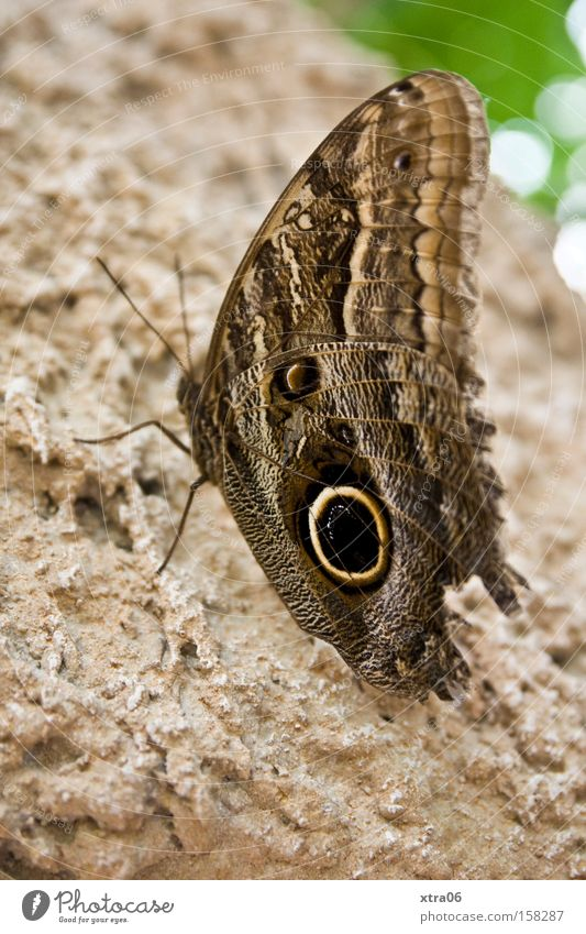 Tree Wing Insect Delicate Butterfly Living thing Feeler Tree bark
