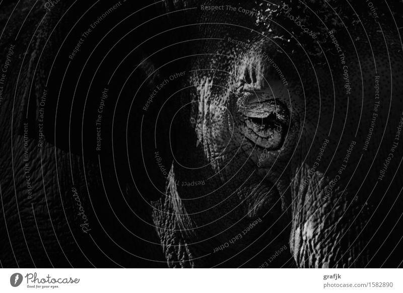 Beautiful White Animal Black Eyes Exceptional Moody Elegant Power Wild animal Esthetic Adventure Africa Exotic Animal face Zoo