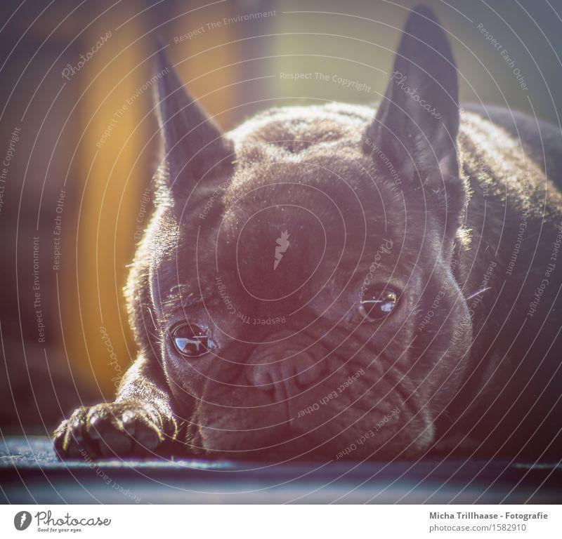 Dog Sun Relaxation Calm Animal Natural Dream Contentment Lie To enjoy Friendliness Near Serene Pelt Sunbathing Pet
