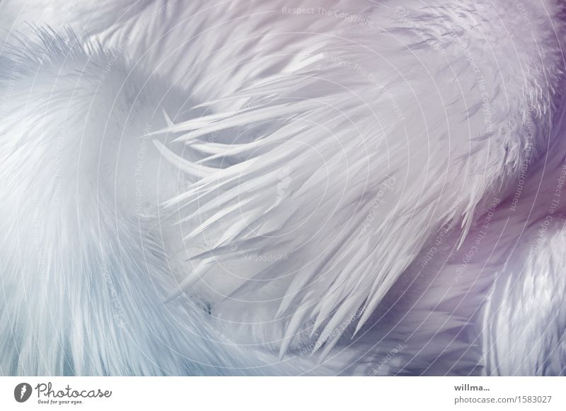 white balance Animal Feather Plumed Fuzz Pelican White Esthetic Exotic Delicate Bright Easy Pastel tone Graphic Web-footed birds Detail Structures and shapes