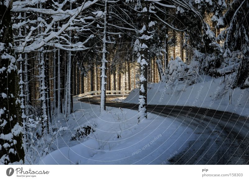 S goes into the light Vacation & Travel Winter Snow Warmth Tree Forest Street Lanes & trails Dark Bright Cold Target Spruce forest Fir tree Winding road Frost