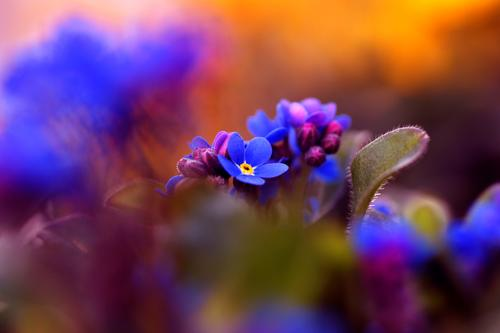 spring Environment Nature Spring Summer Plant Flower Blossom Wild plant Forget-me-not Garden Blossoming Fragrance Growth Esthetic Beautiful Blue Moody Happiness
