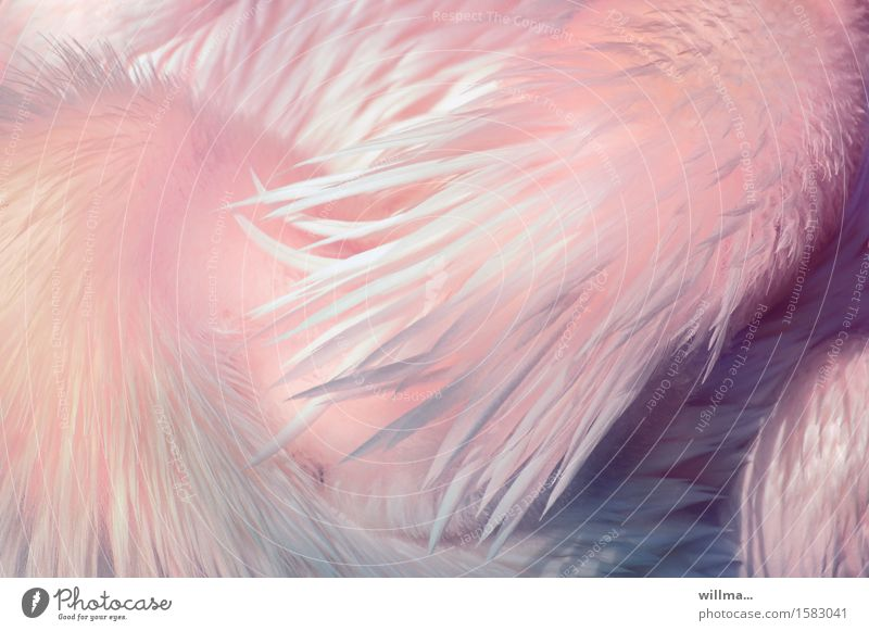 Animal Bright Pink Esthetic Feather Soft Delicate Exotic Easy Neck Pastel tone Plumed Fuzz Pelican