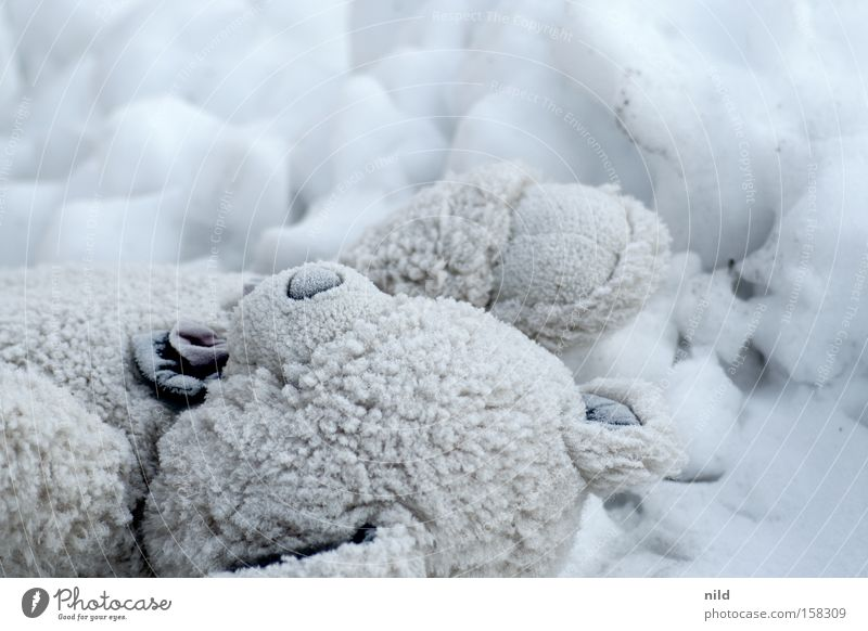 Loneliness Cold Snow Transience Toys Infancy Cloth Freeze Feeble Forget Teddy bear Cuddly toy Plush Freeze to death