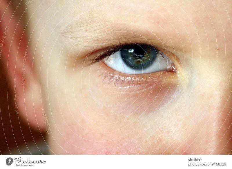 Child Face Eyes Boy (child) Anger Evil Aggravation Threaten