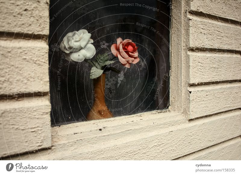 Flower Window Time Romance Kitsch Decoration Transience Plastic Past Nostalgia Curtain Embellish Stagnating Sense of taste Nostalgia for former East Germany