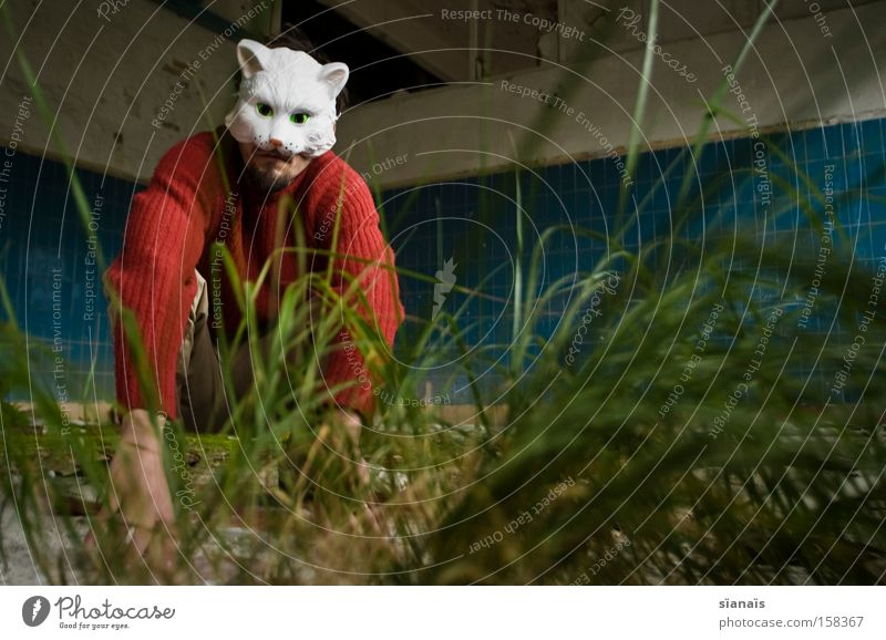 cat grass Worm's-eye view Carnival Factory Mask Pet Cat Sit Surrealism Tile Carnival costume Dress up Lawn Hung-over