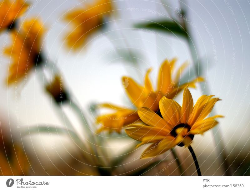 Nature Beautiful Sky Flower Plant Summer Yellow Life Meadow Blossom Movement Warmth Moody Brown Weather Environment