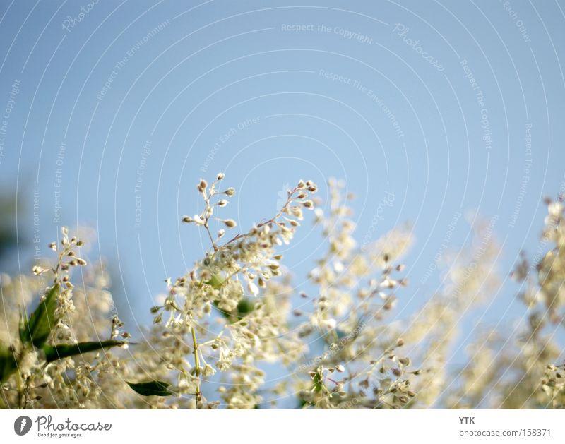 Sky Nature Blue Beautiful Plant Summer Flower Leaf Spring Blossom Garden Air Moody Wind Growth Soft
